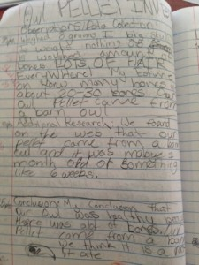 A fifth grade student investigates an owl pellet according to her plan.